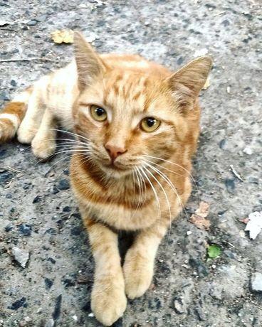 Красивейший котик, месяцев 7, срочно нужен дом