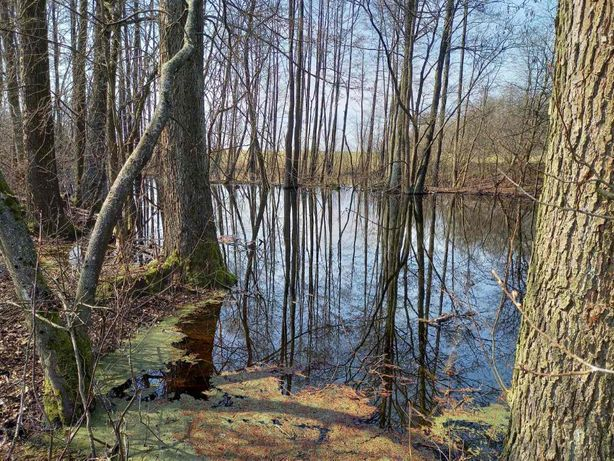Działka rolna na Mazurach z oczkiem wodnym