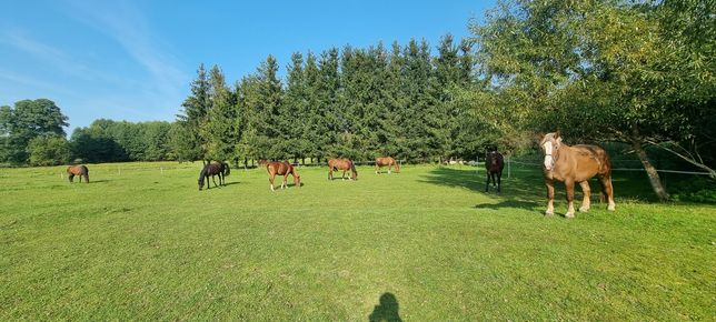 Hotel/Stajnia dla koni