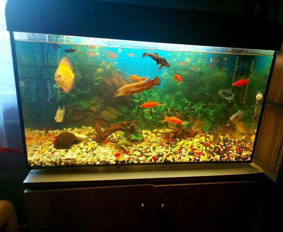 Akwarium 130 litrów