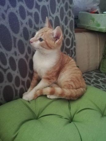 3 месяца котёнку