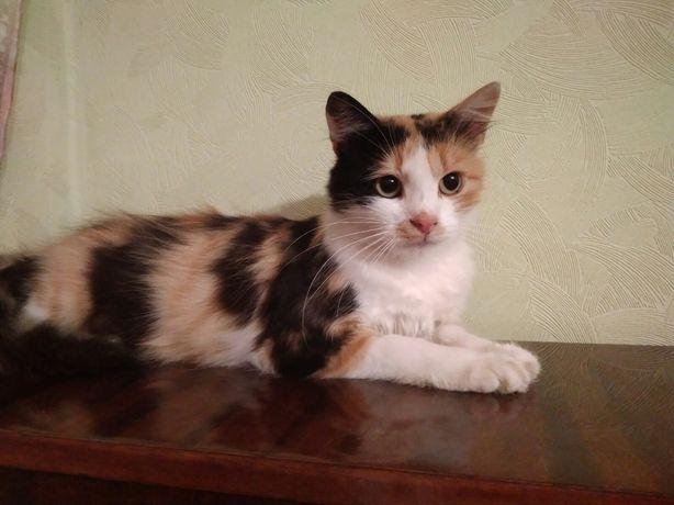 Маркіза 1р кішечка кішка коти в добрі руки кошки коти кошки бесплатно