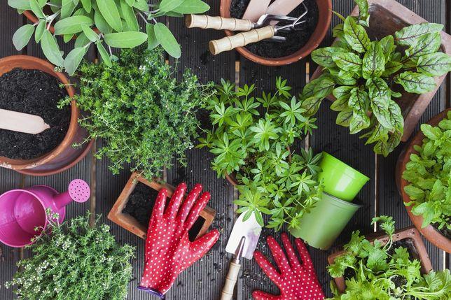 Serviços de jardinagem (Sesimbra)
