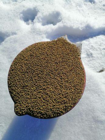 Продам насіння люцерни