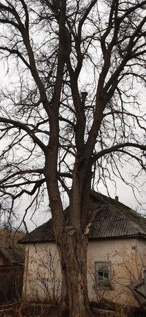 Спил, валка, удаление спил деревьев, арбористика, клонирование