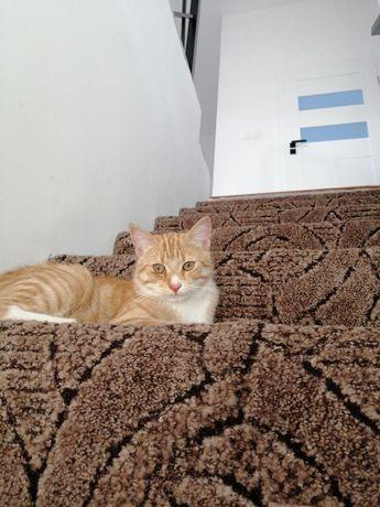 Zaginął Uciekł rudy kot kocur kotek