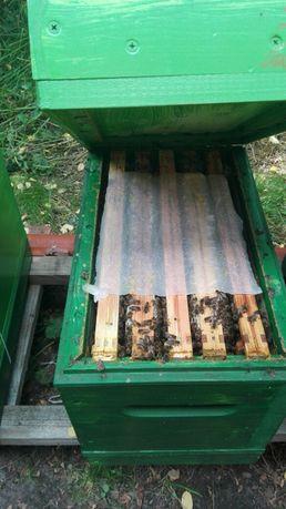 Pszczoły, odkłady pszczele, miód