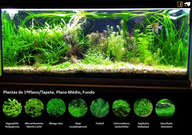 Pack Plantas Aquario Low Tech