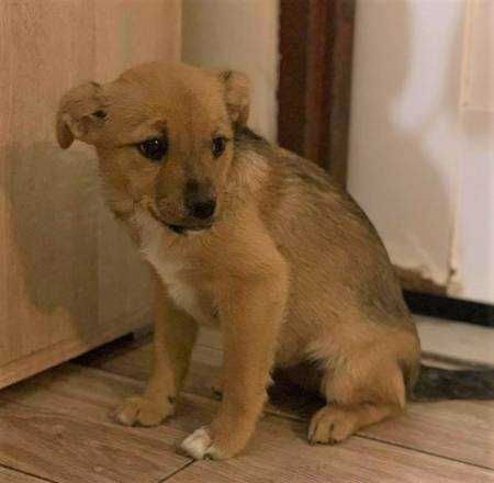 LILI – 3-miesięczna, delikatna szczeniaczka szuka domu!