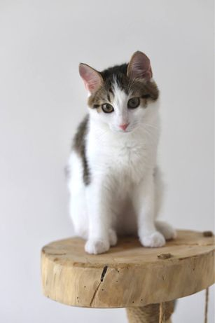 Котята 5 месяцев ищут дом