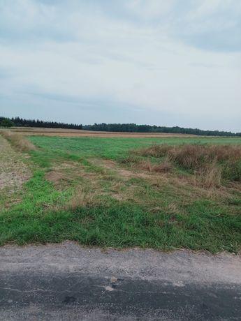 Ziemia rolna w miejscowości Kocia Góra
