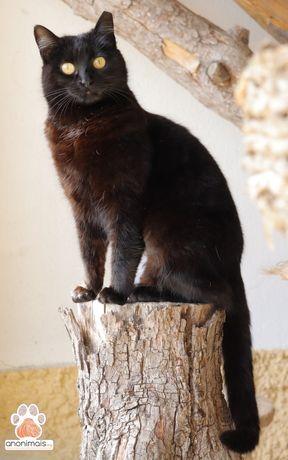 Batata - gata para adopção