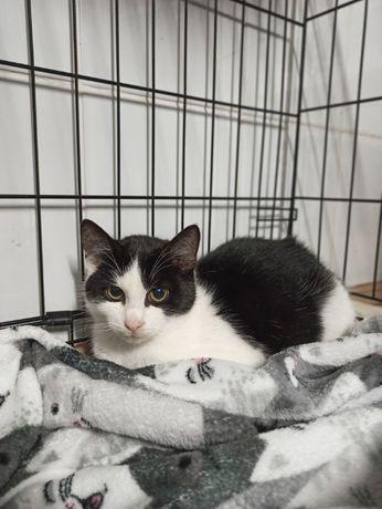 LEOŚ- adoptuj, uratuj kocie życie < 3