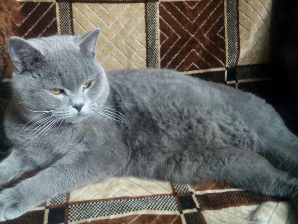 Шикарный кот приглашает кошечек в гости.