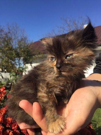 Кошеня Лілі, яка хоче в сім'ю