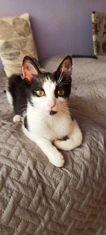 Layla roczna kota do adopcji