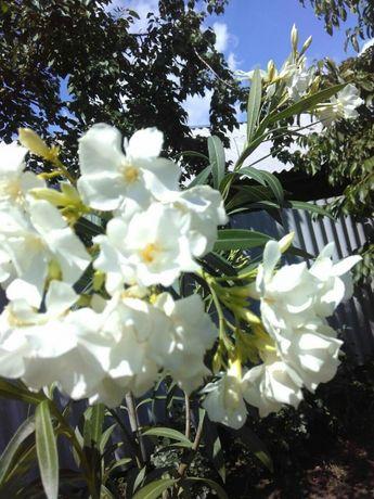 Красивые цветы для двора и дома!