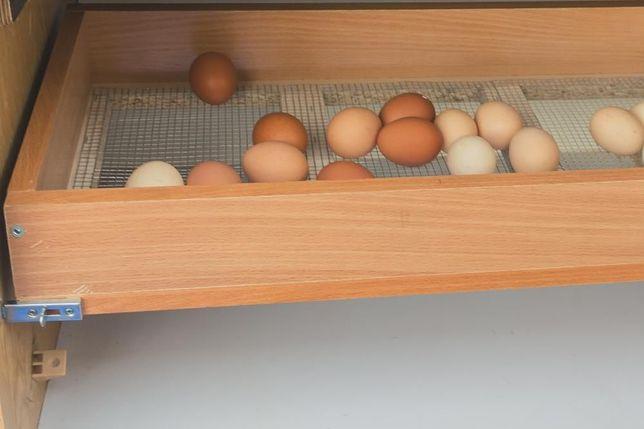 Wylegarka Inkubator70-80 jaj uniwersalny do wszystkich gatunków