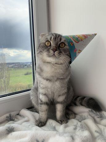 Котик на в'язку