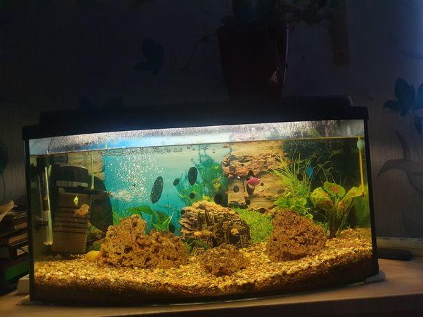 Akwarium 120 L z rybkami