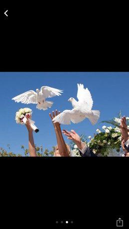 Продам голубей на свадьбу выпускной