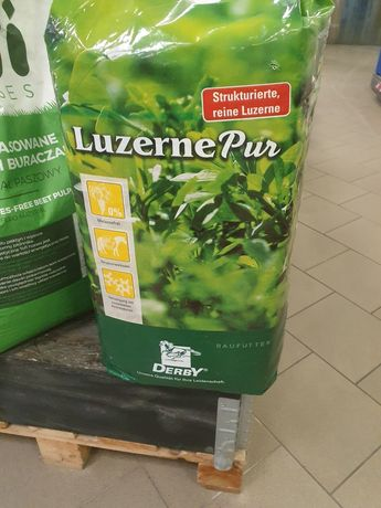 Lucerna Sieczka Derby Luzerne Pur