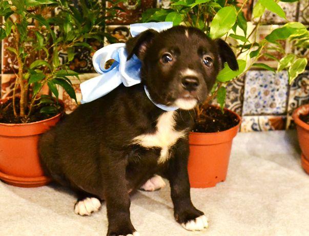 Позитивный небольшой щенок-мальчик, два месяца