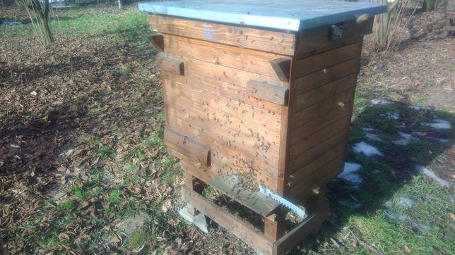 Pszczoły - odkłady