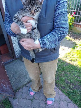 2,5 miesięczna koteczka