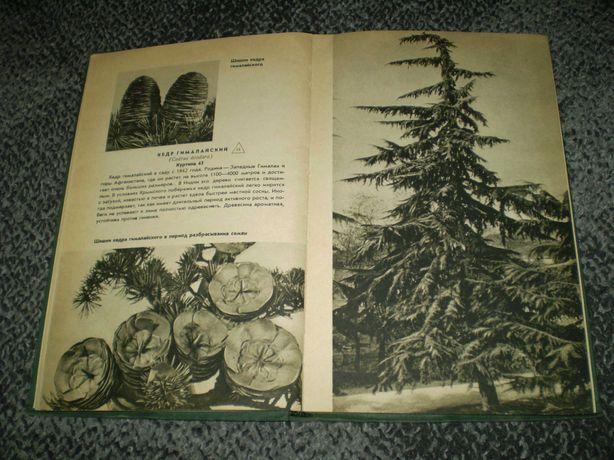 В.Боголюбова Государственный Никитский ботанический сад. М. 1962г.