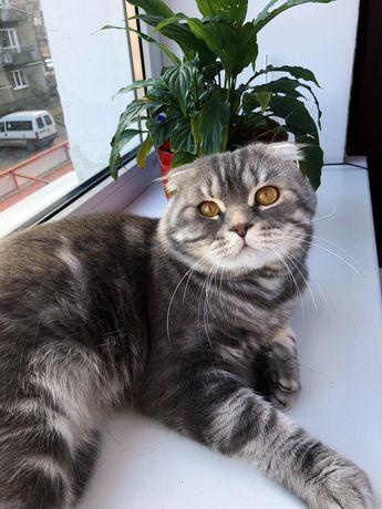 Пропав котик