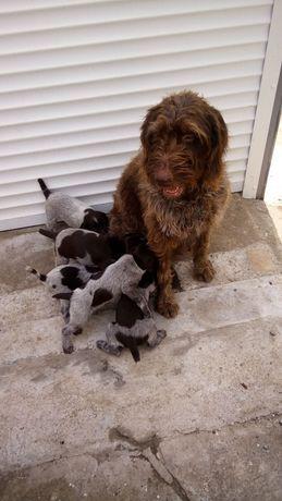 Собаки Животные продаю