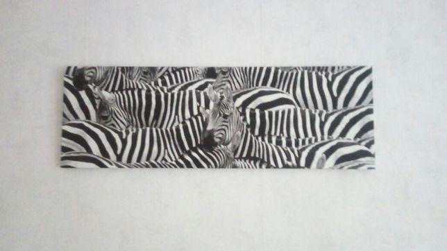 Obraz zebra