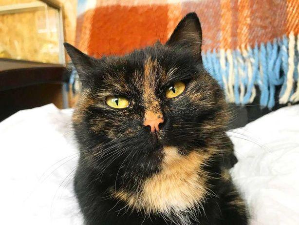 Джели, ласковая черепаховая кошечка, ищет дом! кошка кот котенок