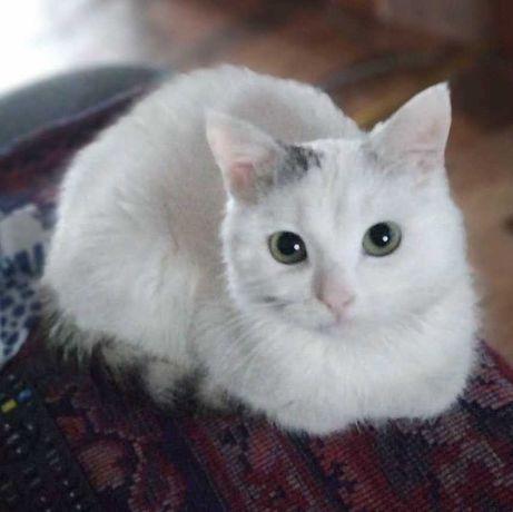 Домашний ласковый котик ищет новую семью!