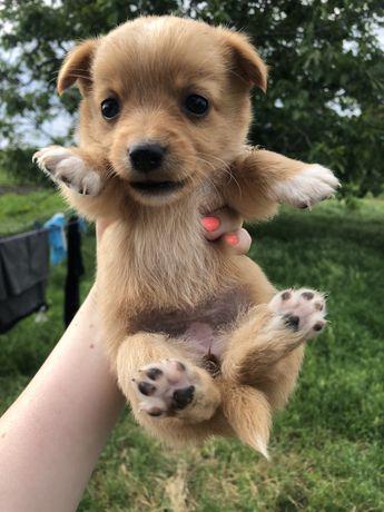 Отдам в хорошие руки щенков девочек