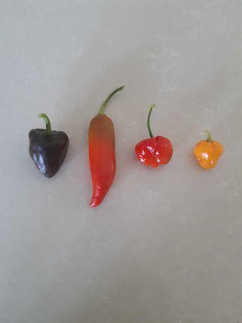 Sementes de Pimentos raros