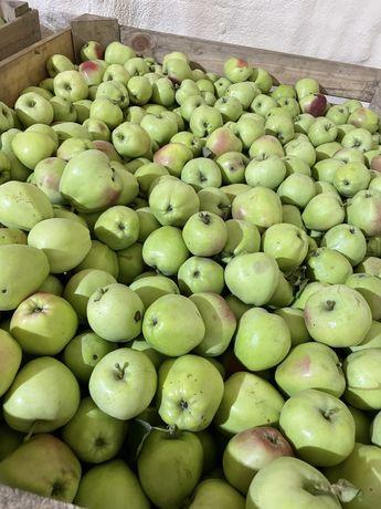 Яблука сенап