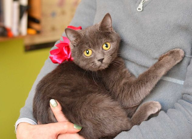 Кошечка Киша - ласковая красотка 8месяцев