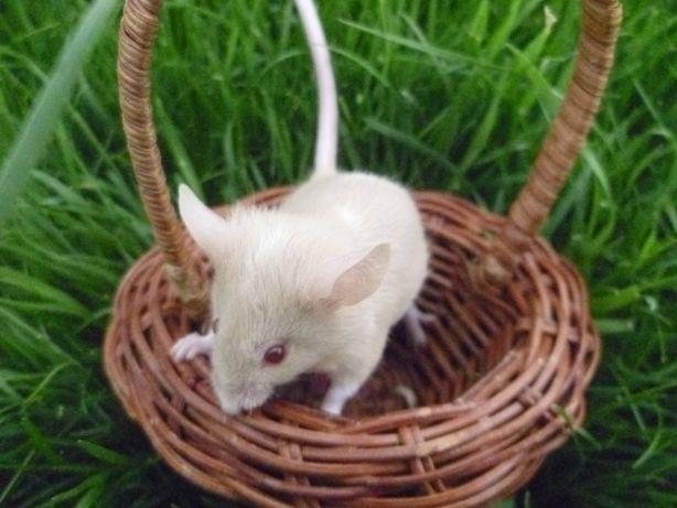 Ручная декоративная мышка