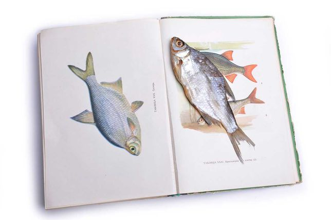 Плотва вяленая — 200 грн. за кг. и другая вяленая рыба, икра