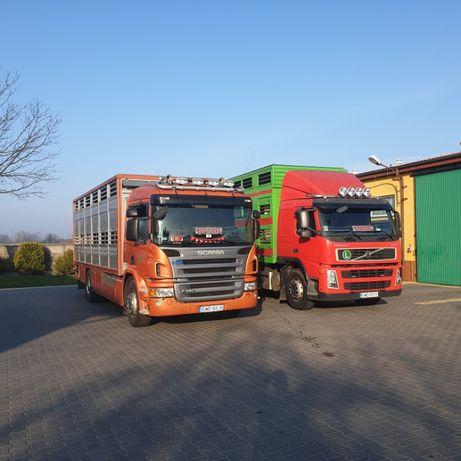 Transport zwierząt przewóz zwierząt