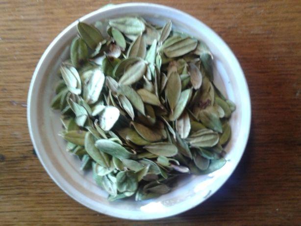 брусника лист фасоль (квасоля) створки