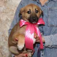 Маленькая девочка бесплатно ( щенок щенки собака )