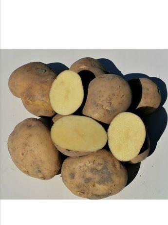 Ziemniaki odmiana Denar