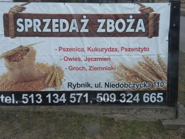 Sprzedaż zboża (pszenica, żyto, pszenżyto, jęczmień, owies ziemniaki)