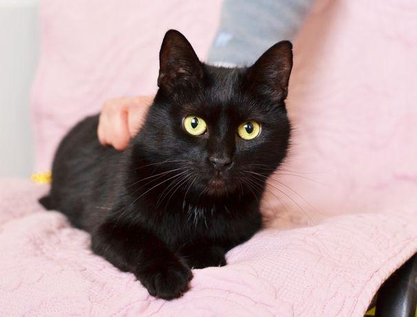Мелані киця із серіалу про пригоди Сабріни | чорна кішка 1 рік