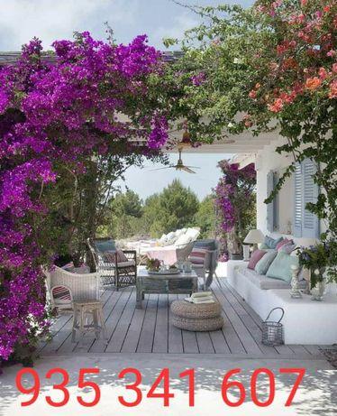 Jardineiro - Limpeza e manutenção de jardins/varandas/terraços