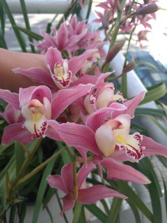 Vendo orquídeas cor de rosa