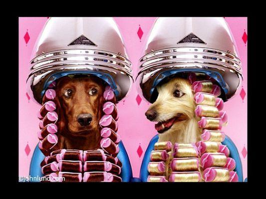 Стрижка собак+ ультразвуковая чистка зубов